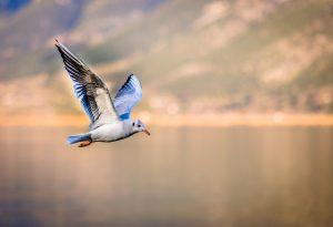 bird-car-relativity