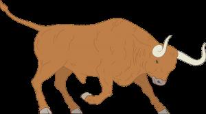 bison-charging