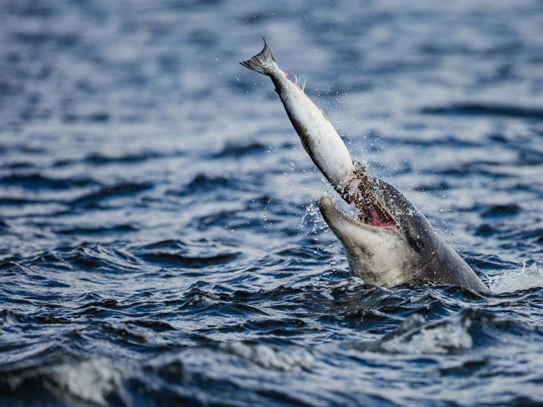 dolphin-catching-fish