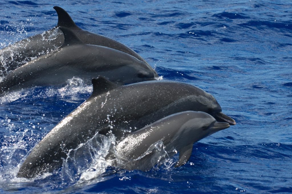 dolphin-group