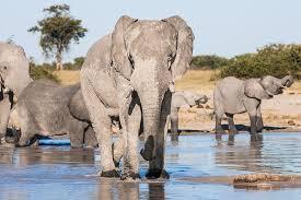 elephants-drinking-water