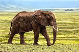elephants-in-africa