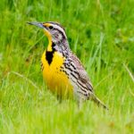 bird-facts