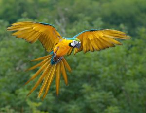 blue-yellow-macaw-colors