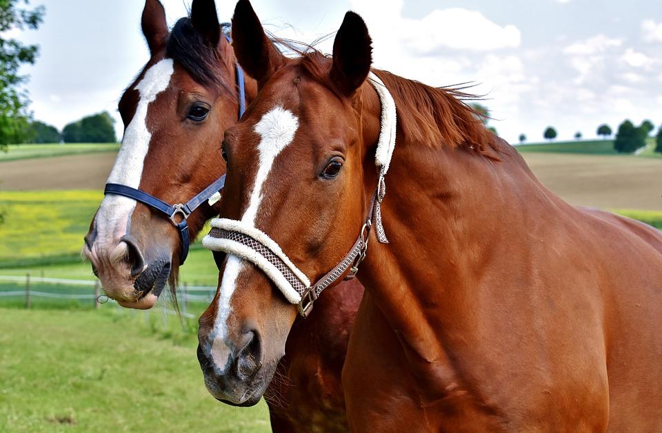 horse-eyes-vision