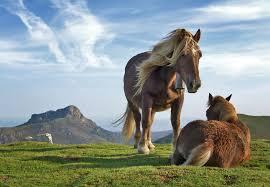 horse-mammal