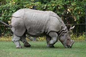 rhino-for-kids