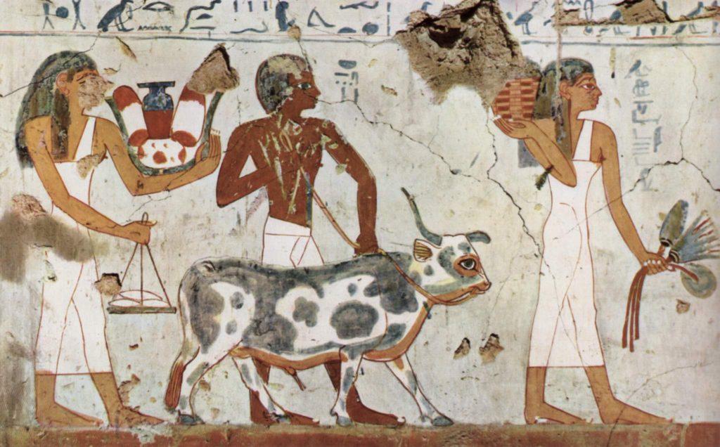 cattle-egypt