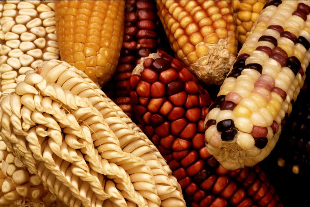 crops-farming