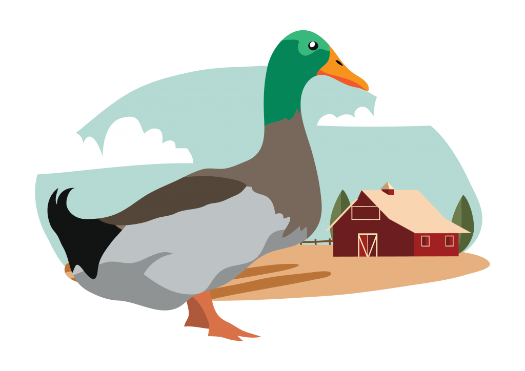 duck-food-egypt