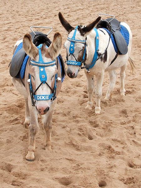 Donkey Pair