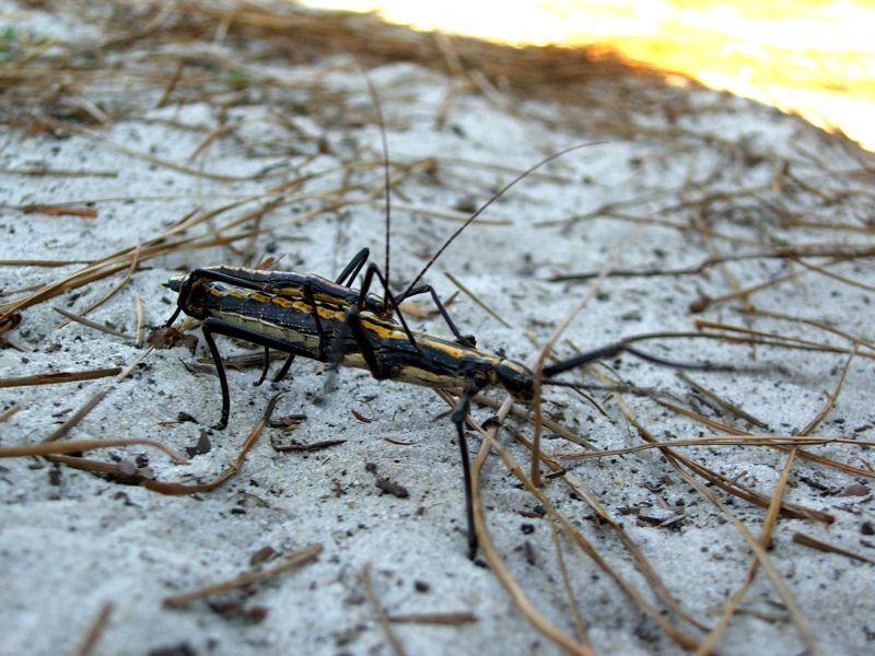 Stick Bug Habitat