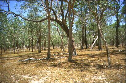 Australian savanna
