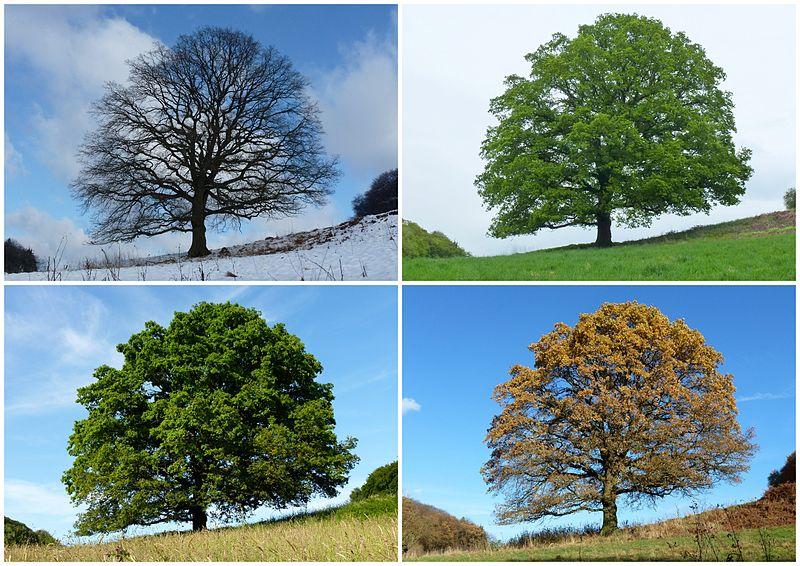 Four temperate and subpolar seasons Winter, Spring Summer, Autumn(Fall)