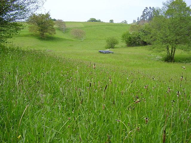 Grassland in Cantabria