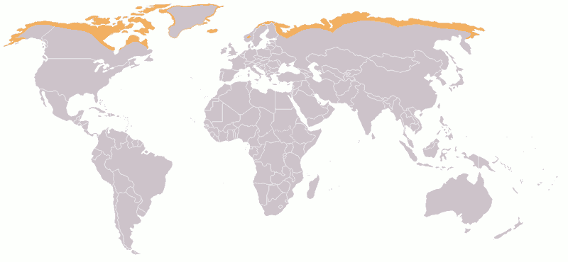 Map showing Arctic tundra