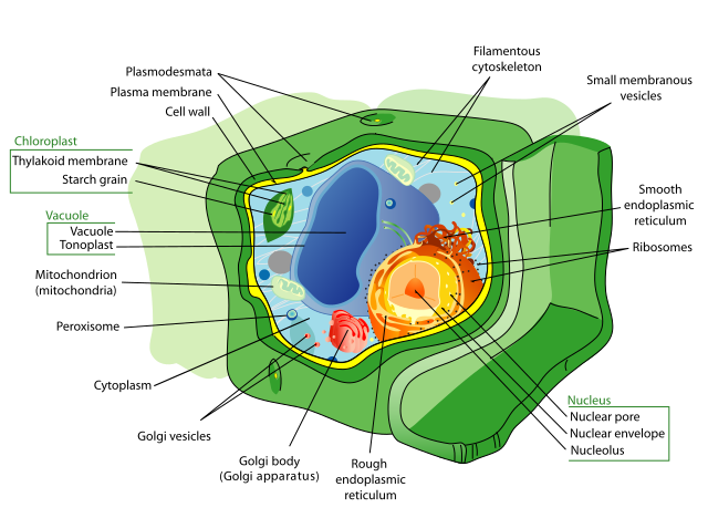Plant cell structure