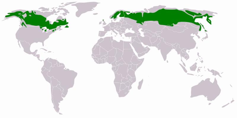 Taiga Distribution